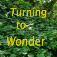 The Courage to Lead 2016 poster is a background photograph of a path in the woods with ivy like ground cover on the sides of the path and with dappled sunlight shining through. The event text is in bright lemon yellow.
